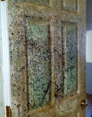 How To Remove Black Mold Pa Nj De