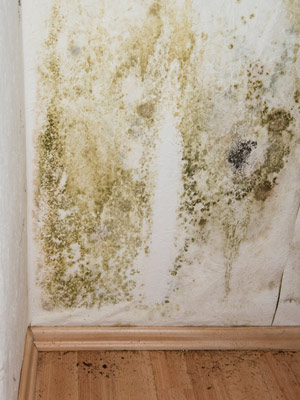 Causes of Mold Growth