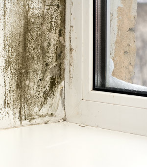 Mold Remediation Misconceptions